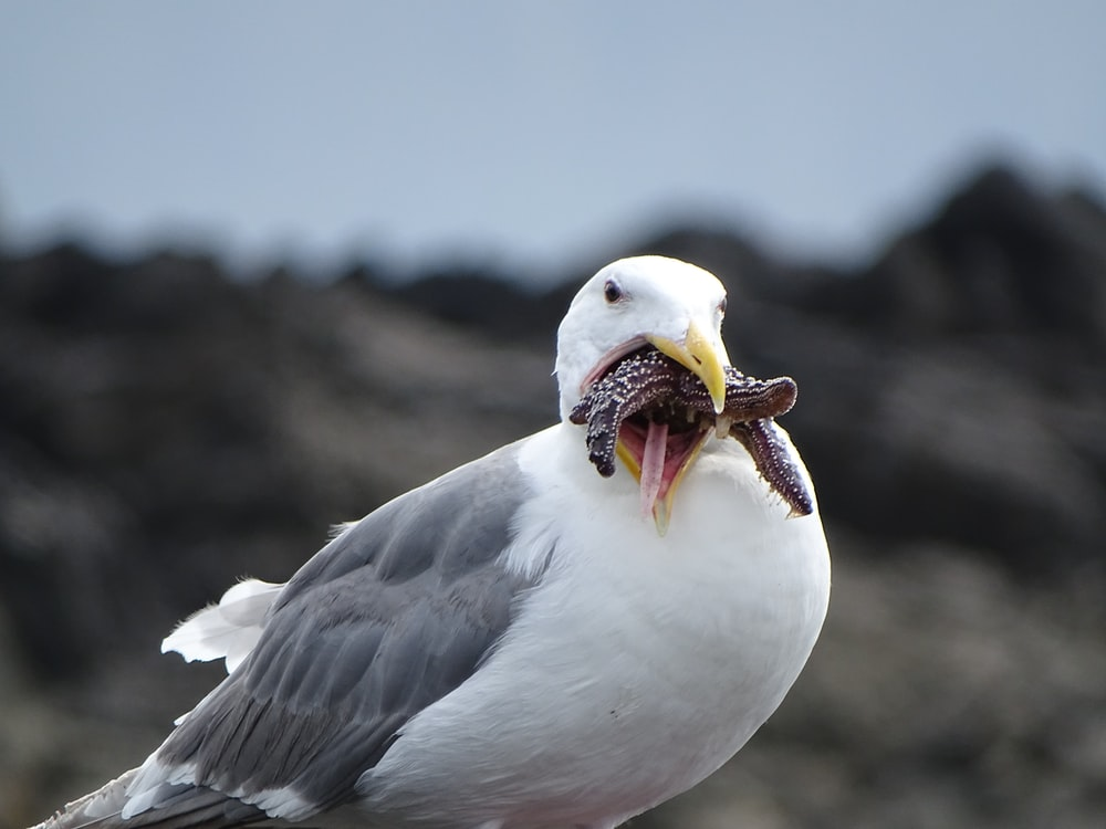white and gray bird with worms in beak