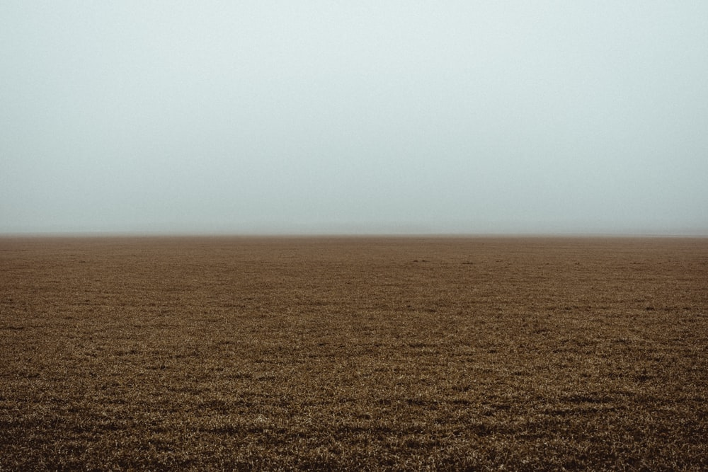 brown field