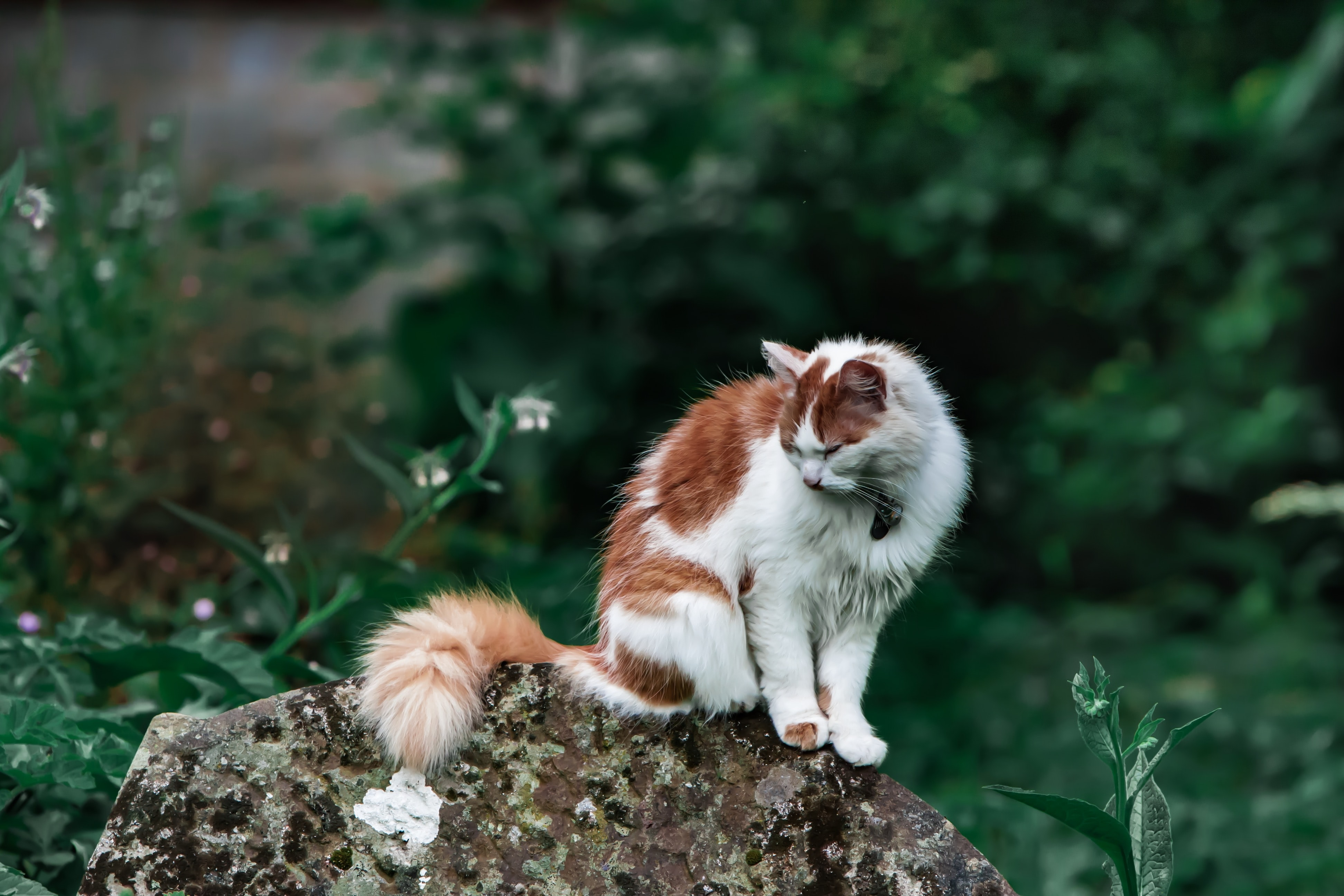 brown and white cat standing on stone fragment