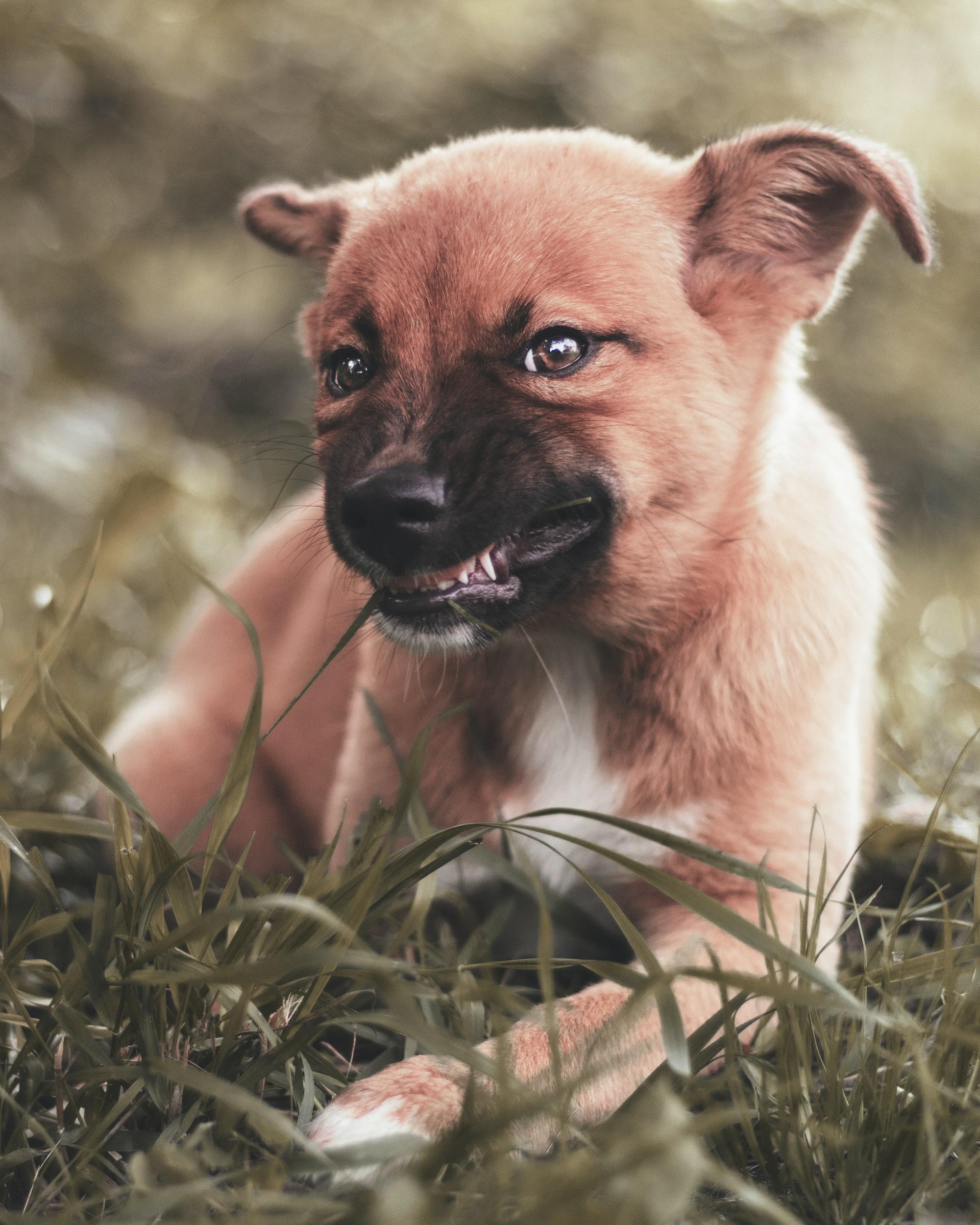 puppy teeth