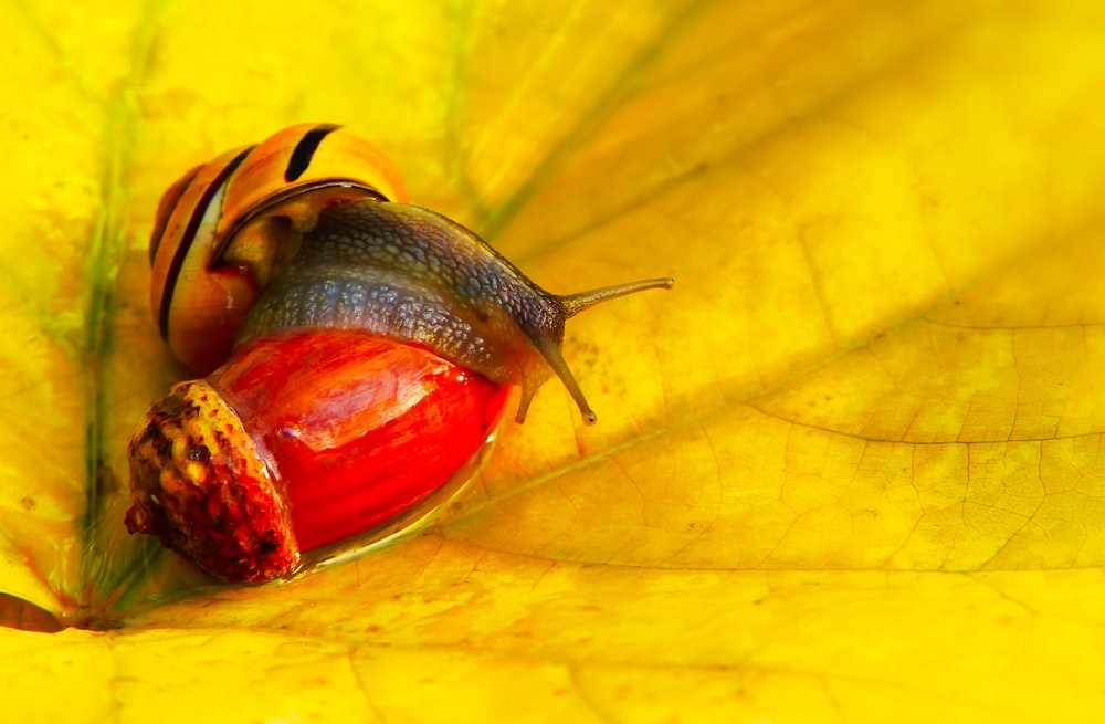 red and black snail close-up photography