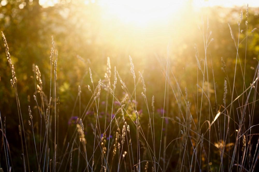grass under the sunny light