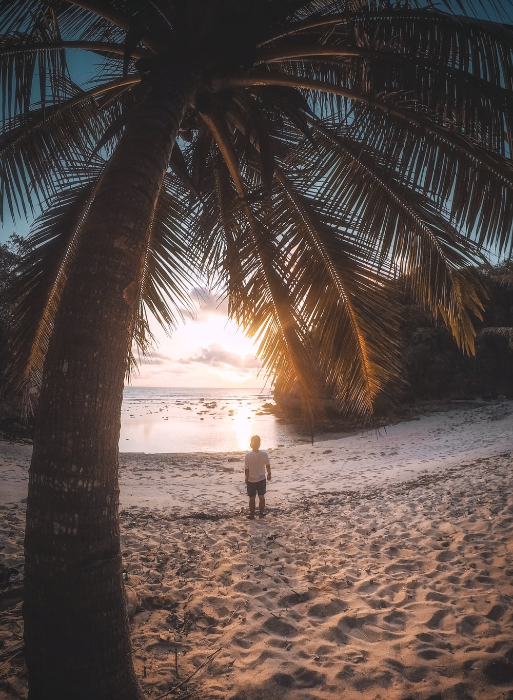 man standing on beach near palm treses