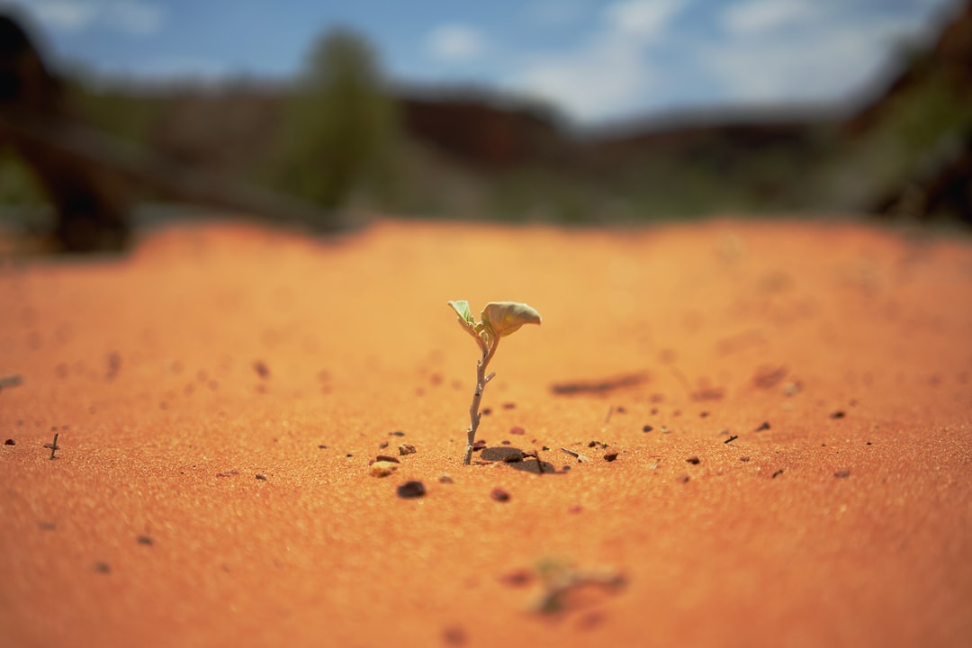 Hiking in Outback Australia you will realize life can find a way everywhere on Earth.