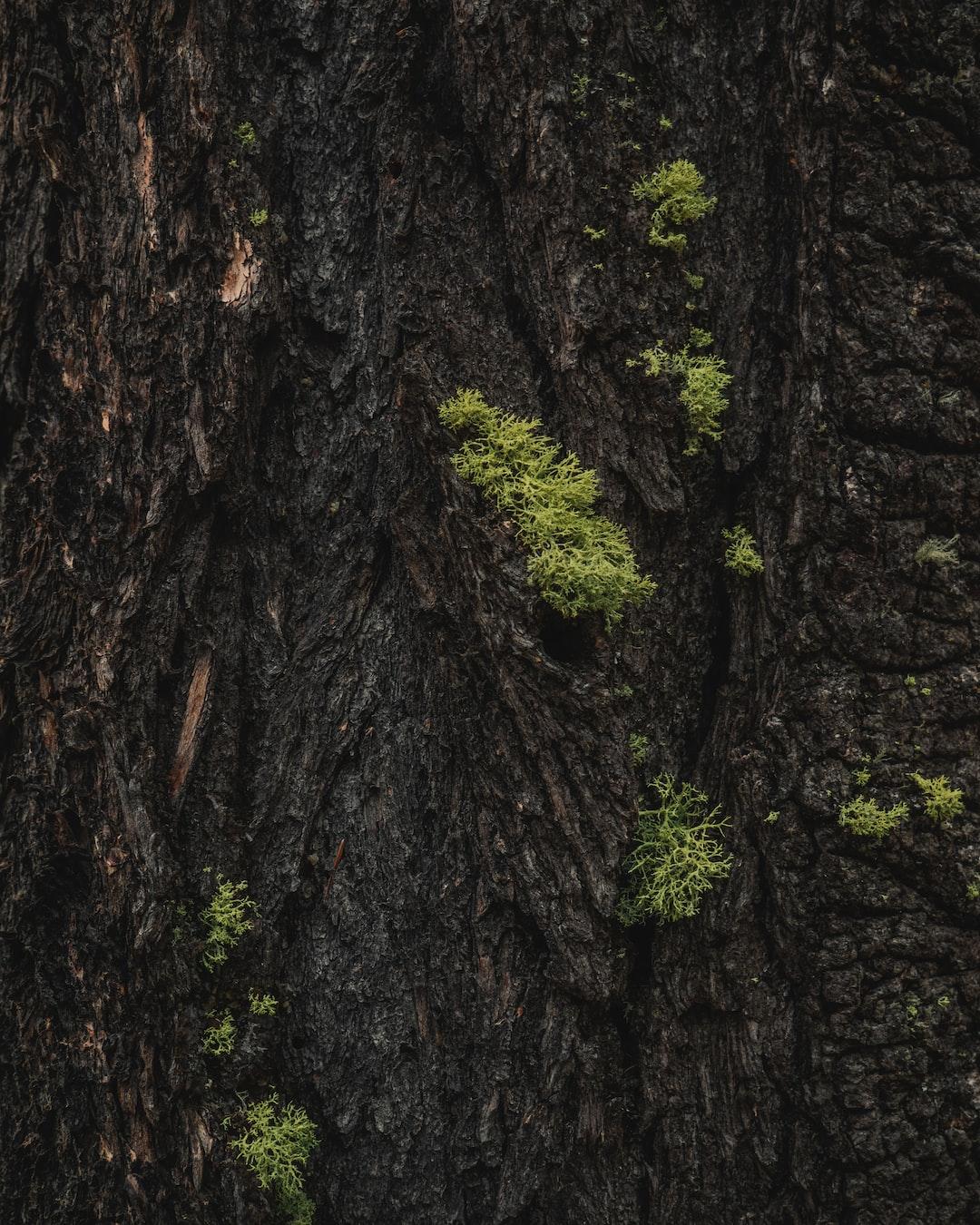 Tree bark - texture 2