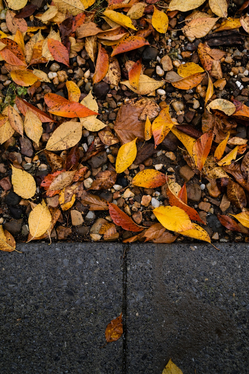 brown dry leaves on gray surface