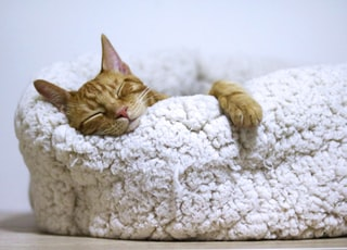 orange tabby cat sleeping on white pet bed