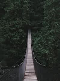 Bridge bridge stories