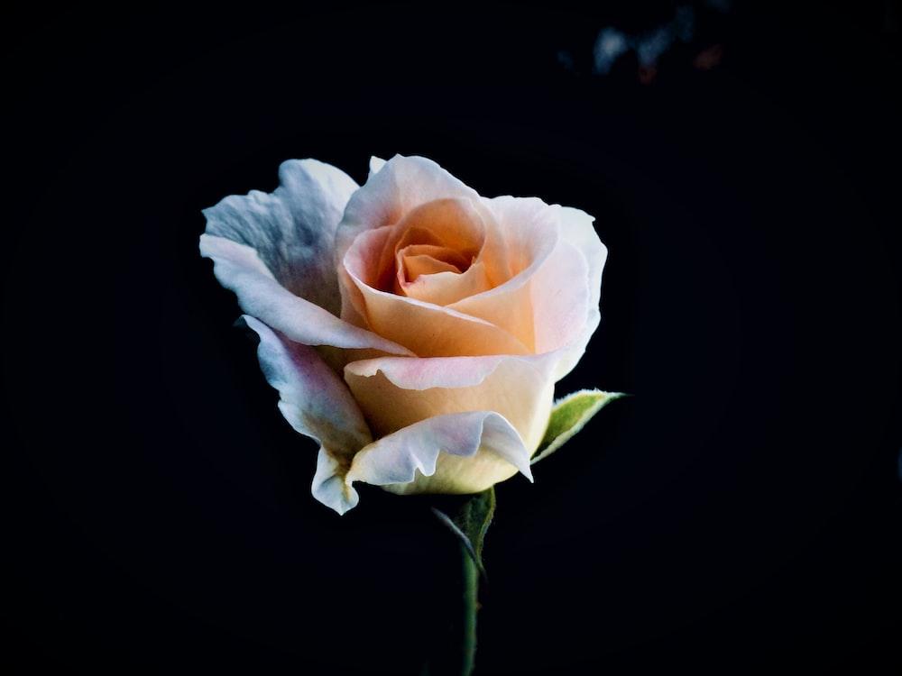 DIY Flowers: How To Make Satin Ribbon Rose?