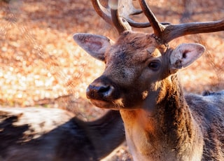 brown deer at daytime