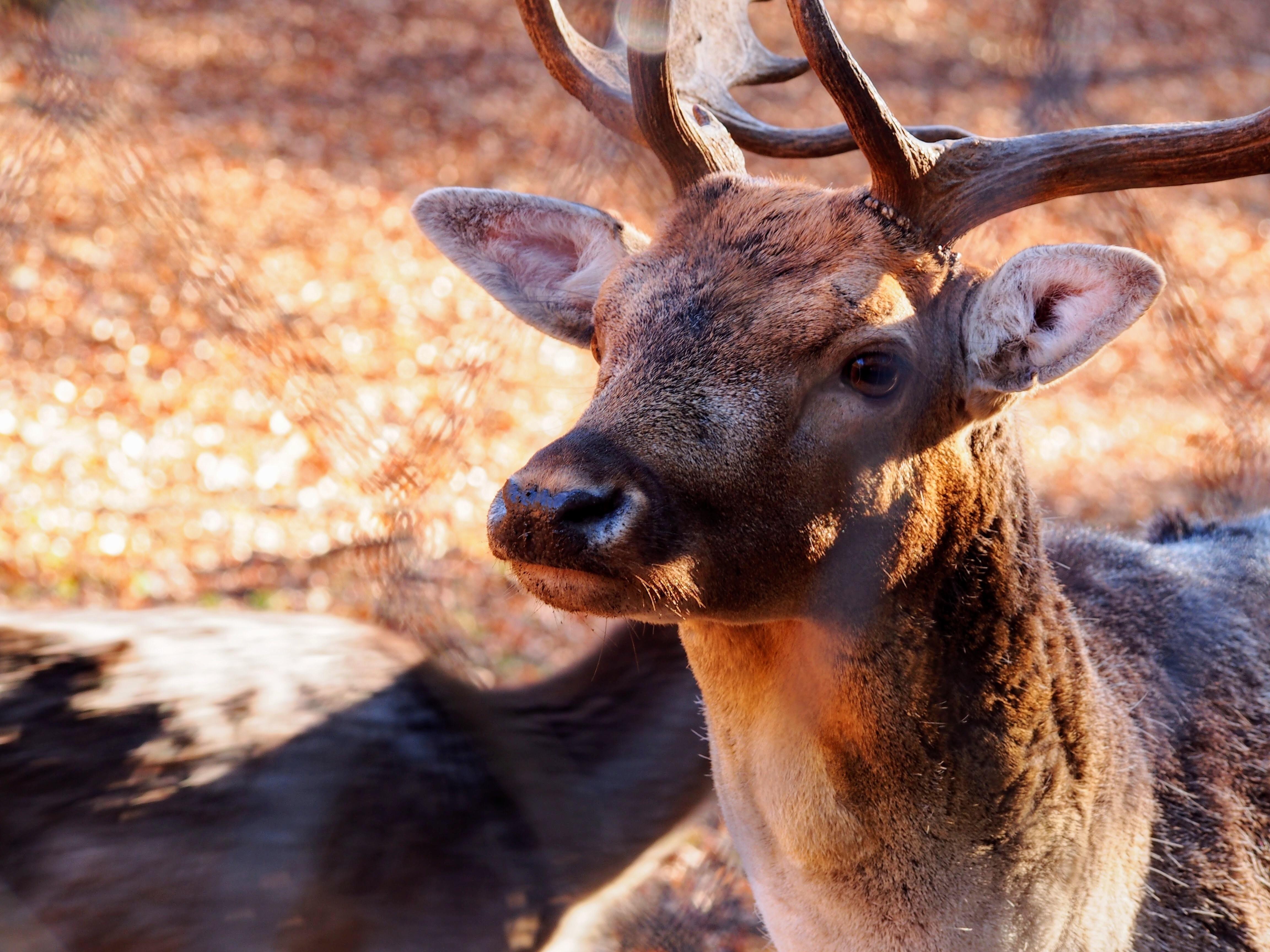 deer selective focus photography