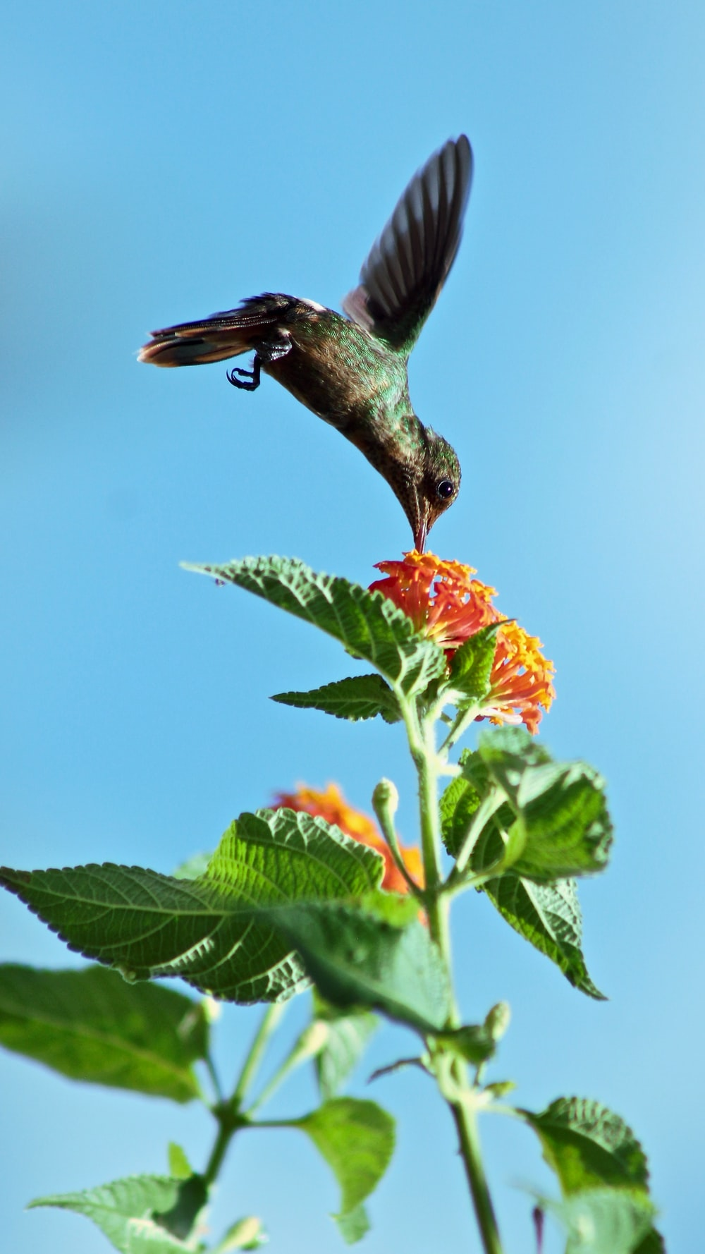 bird flying and biting petaled flower during daytime