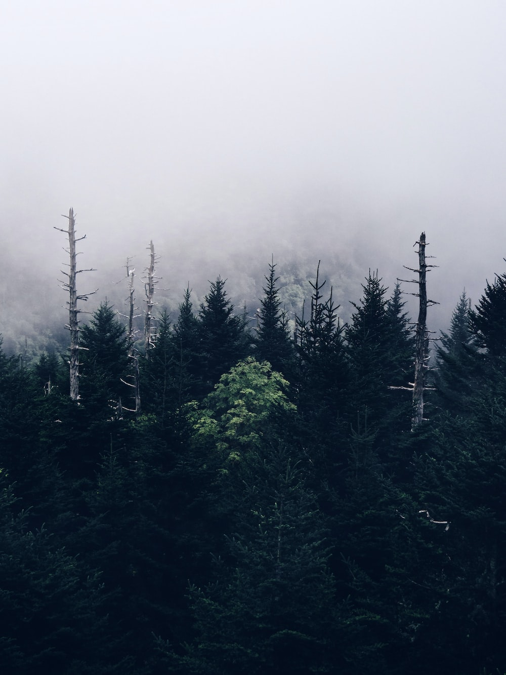 tall green trees during foggy weather
