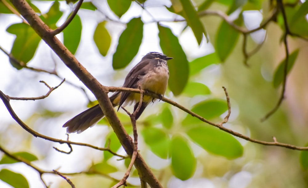 gray and white bird on brown tree branch
