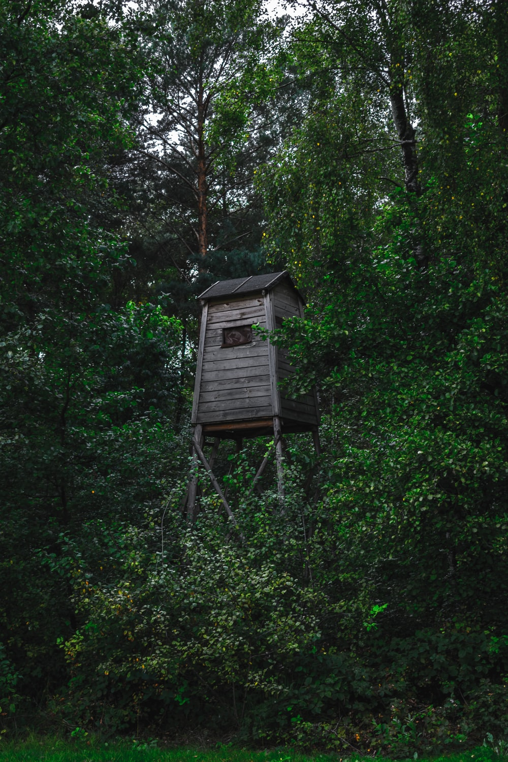 brown watch tower in forest