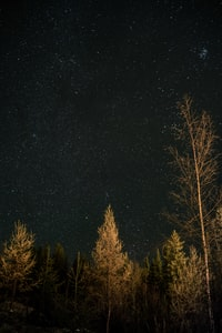 green leafed trees under sky with stars at night