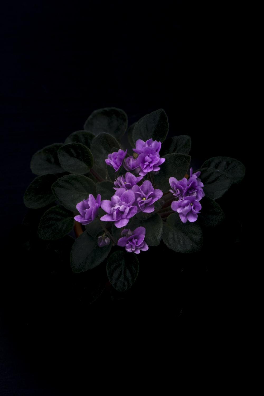 closeup photography of purple-petaled flower