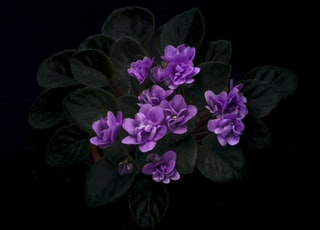 closeup photography of purple-petaled flower