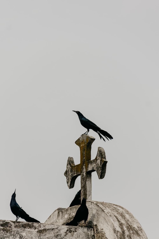 crow on white concrete cross