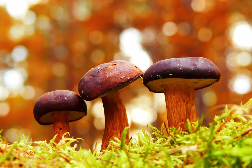 Forget CBD. Mushrooms Are The Beauty And Wellness Superfood