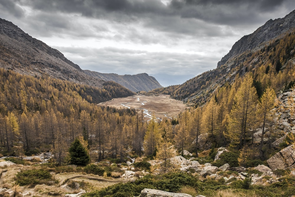 bird's eye view photography of trees near mountains