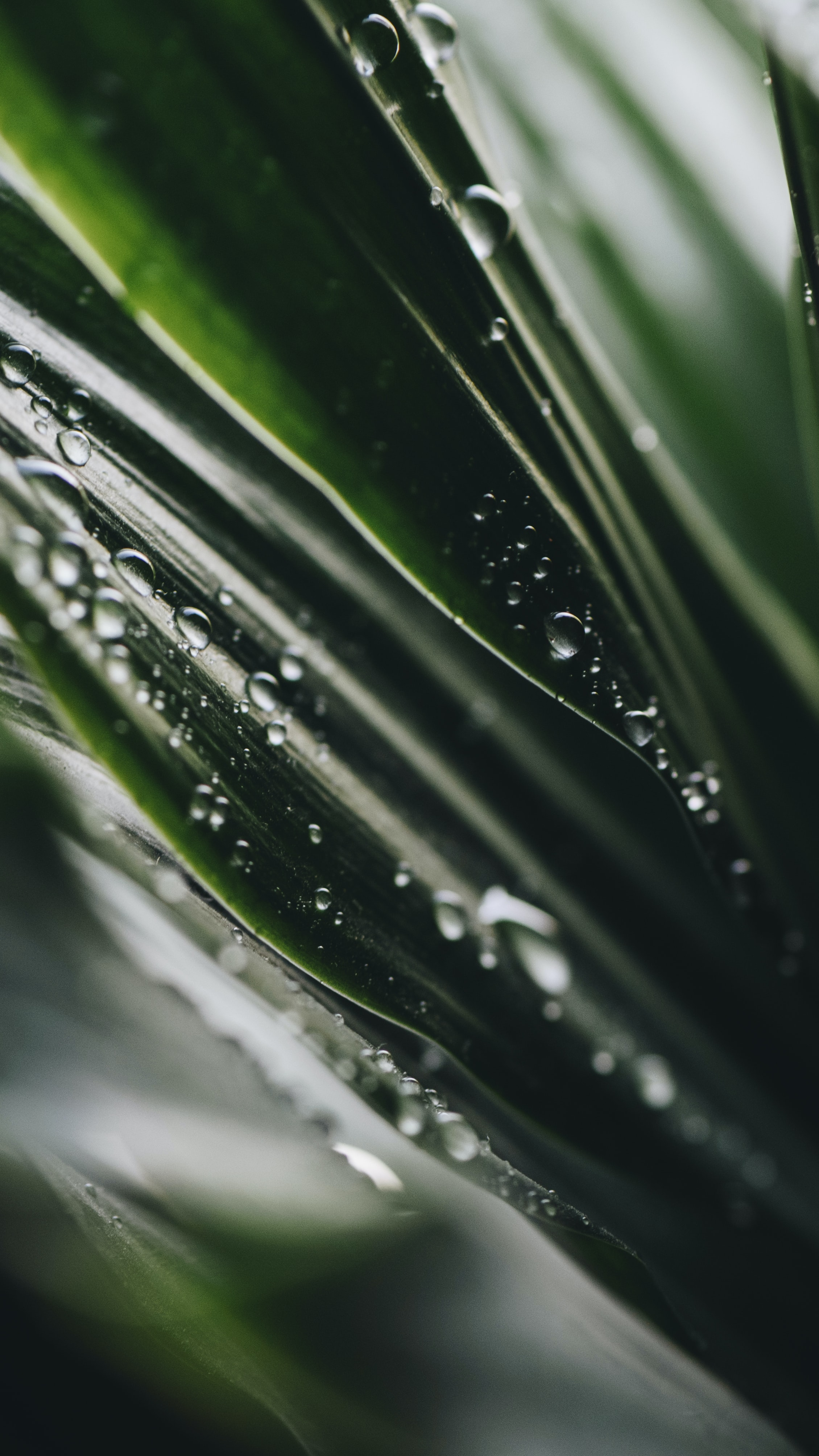selective focus photography of water dew on green leafed plant