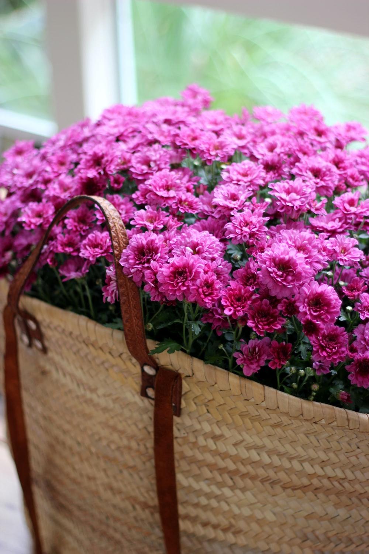 bag of purple petaled flowers