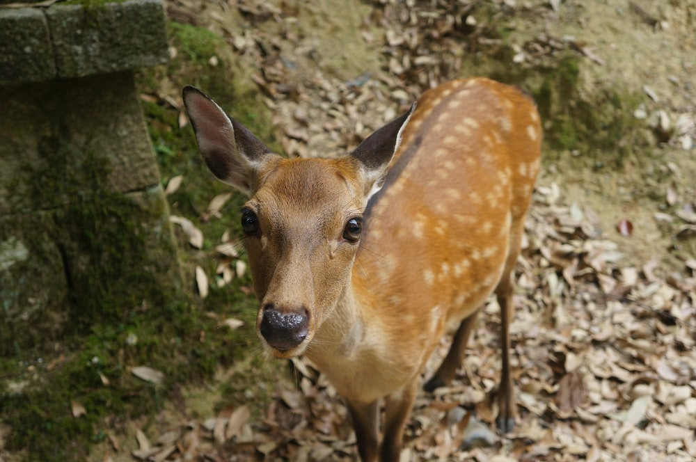 brown deer standing beside concrete wall