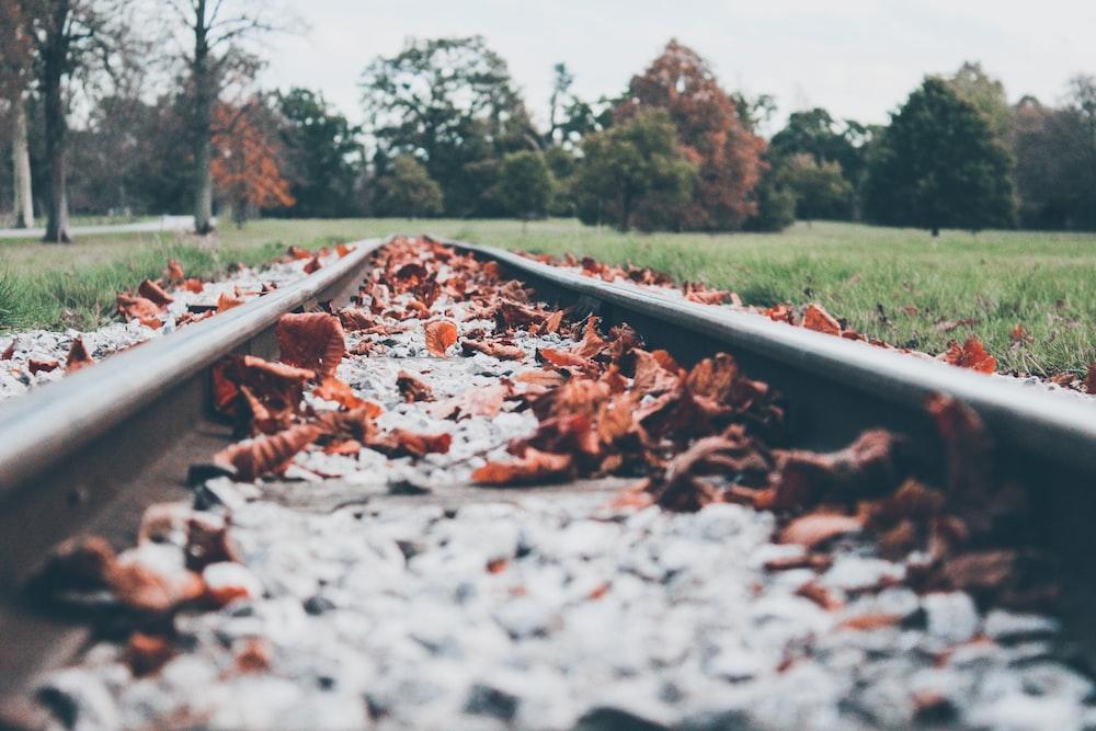 dried leaves on railway