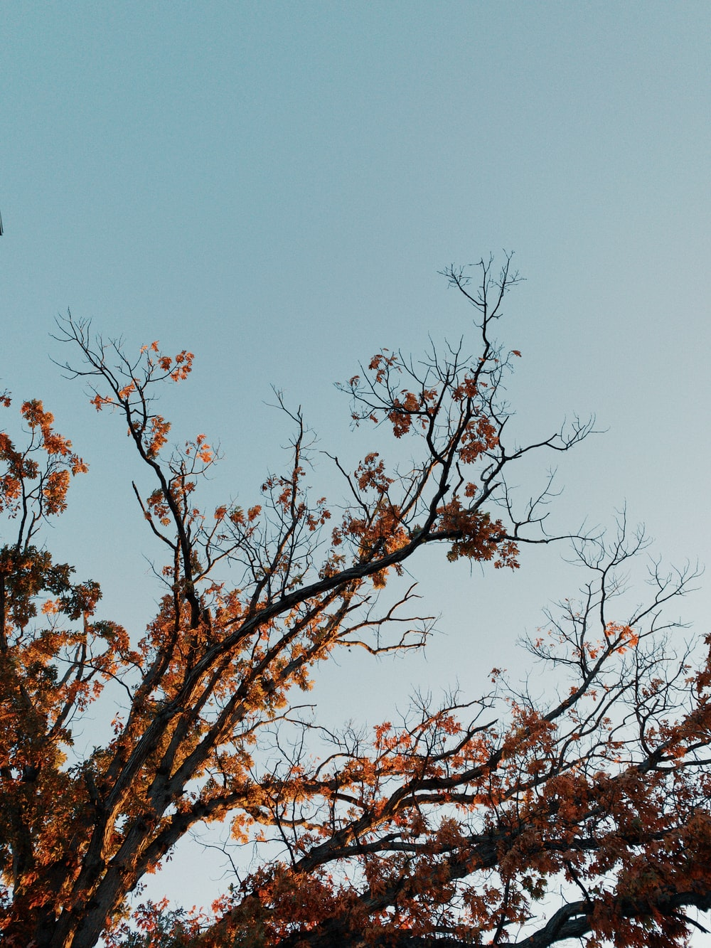brown-leafed tree during day time
