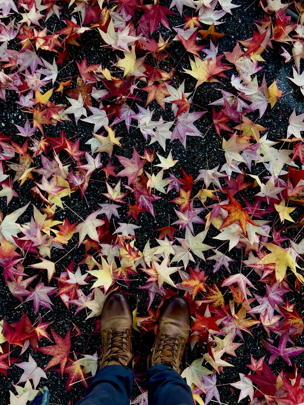 red, pink, and brown colored maple leaves on concrete floor