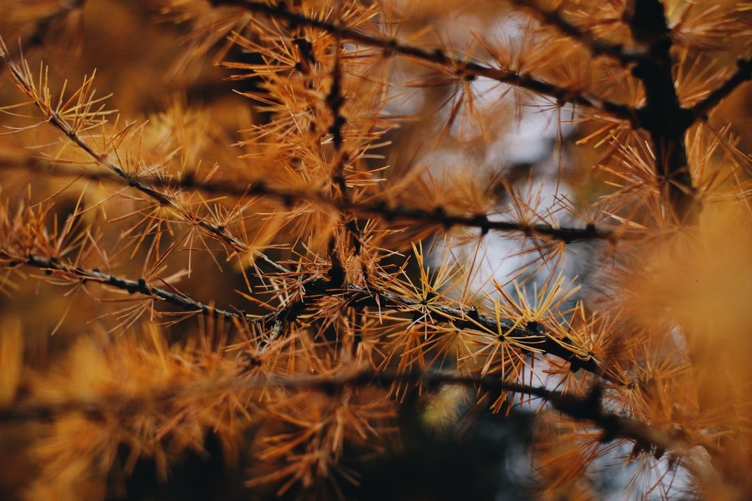 Me and my gf went for a short walk on Sunday - the weather wasn't the best, however it is always a great feeling when you go out and breath some fresh air. We stopped by this awesome orange pine (or fir) tree to take some portraits of my gf as I wanted to test my new 50mm f/1.2 lens. However there were still some small groups of people walking or running around us most of the time so we took a short break from posing for portraits. And as I was waiting for people to disappear in the distance I raised my head and looked above me through the viewfinder. This is the amazing view I saw!