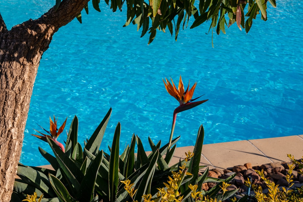 flowers beside blue pool