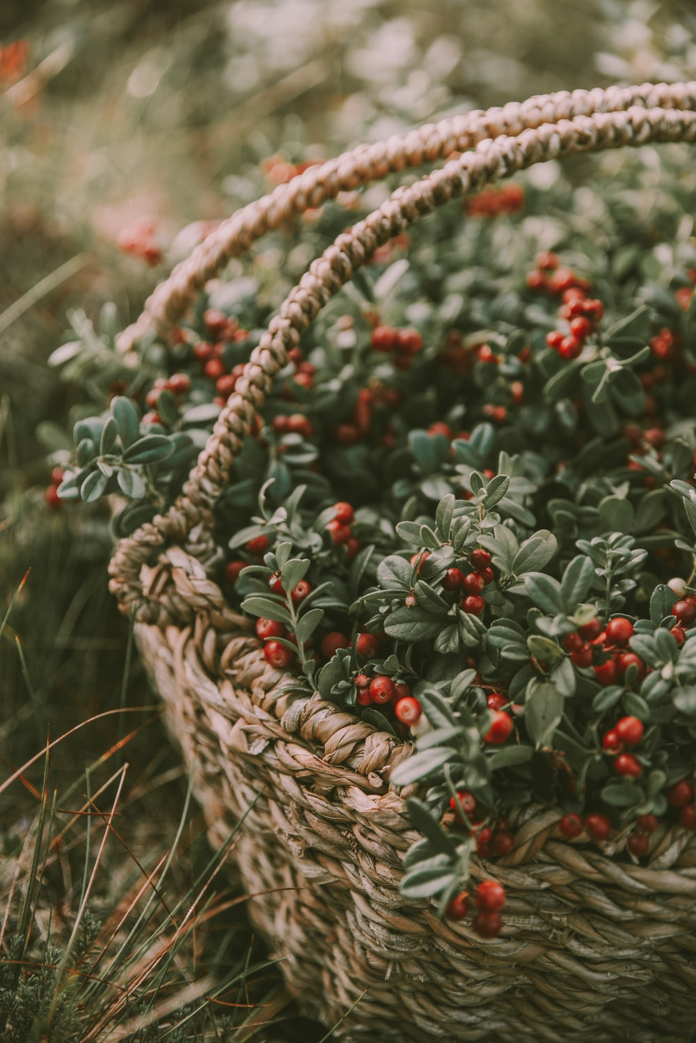 selective focus photography of basket of red cherries