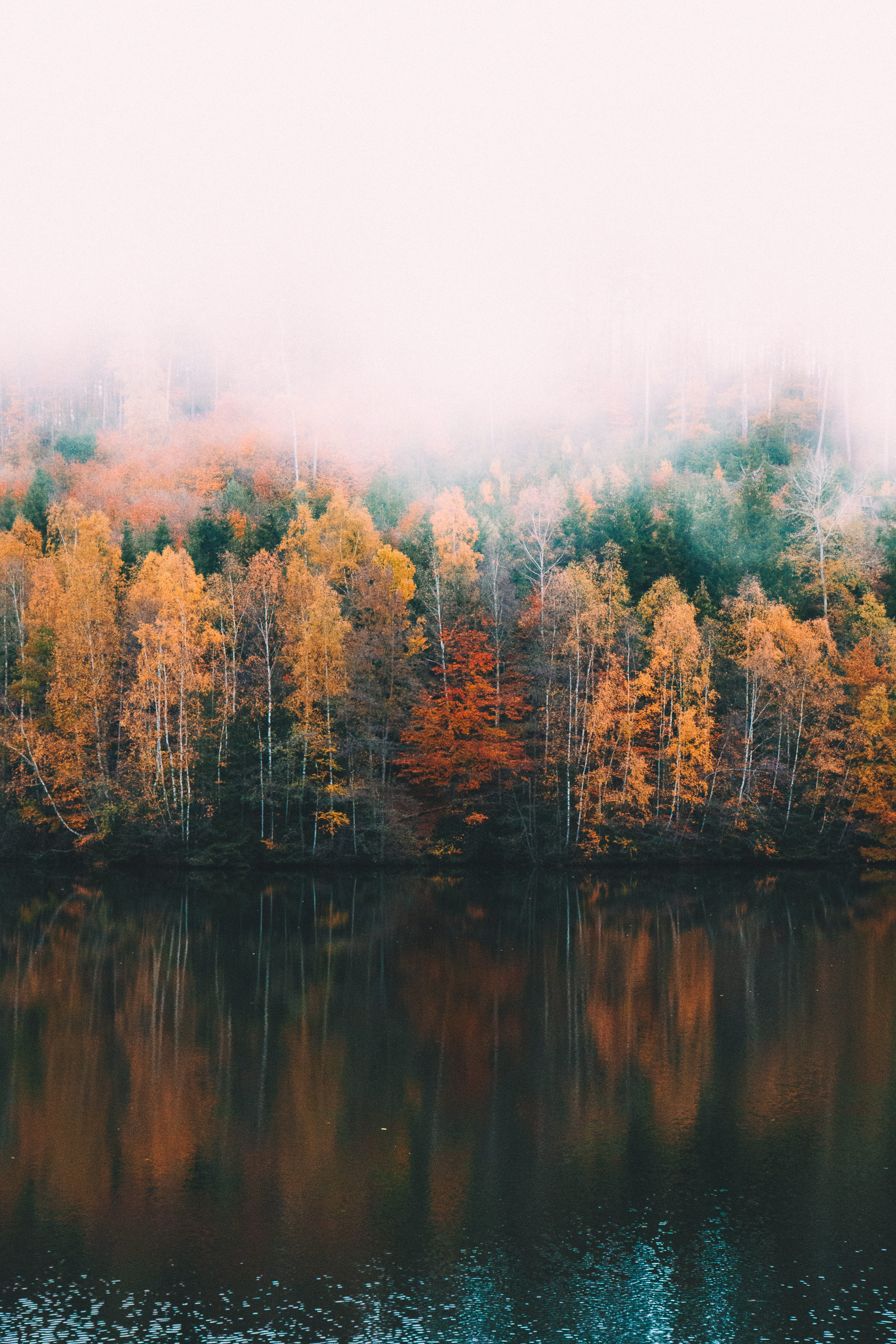 yellow and green trees beside calm body of water
