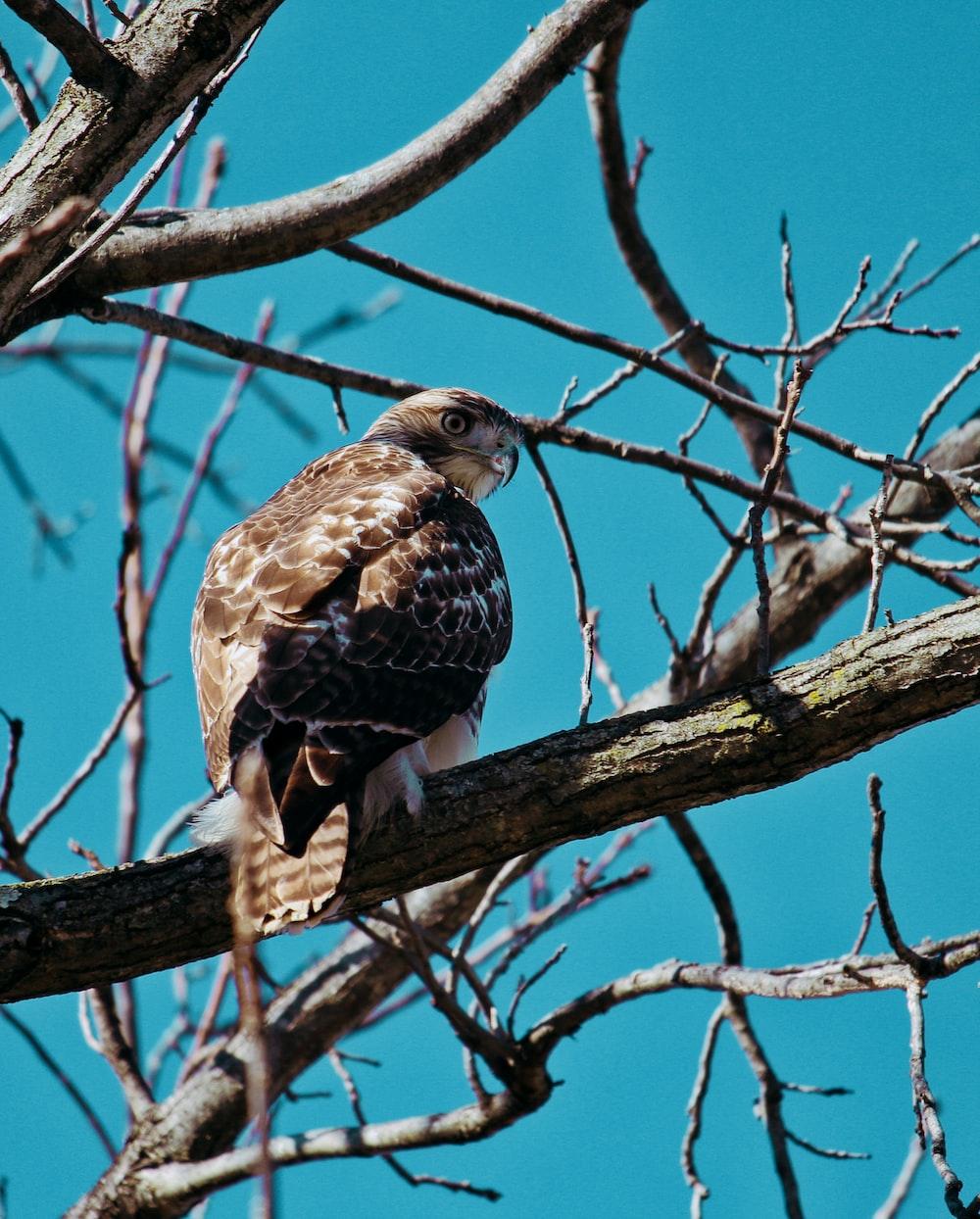 brown owl perching on tree