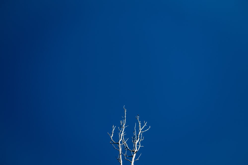 gray tree under blue sky during daytime