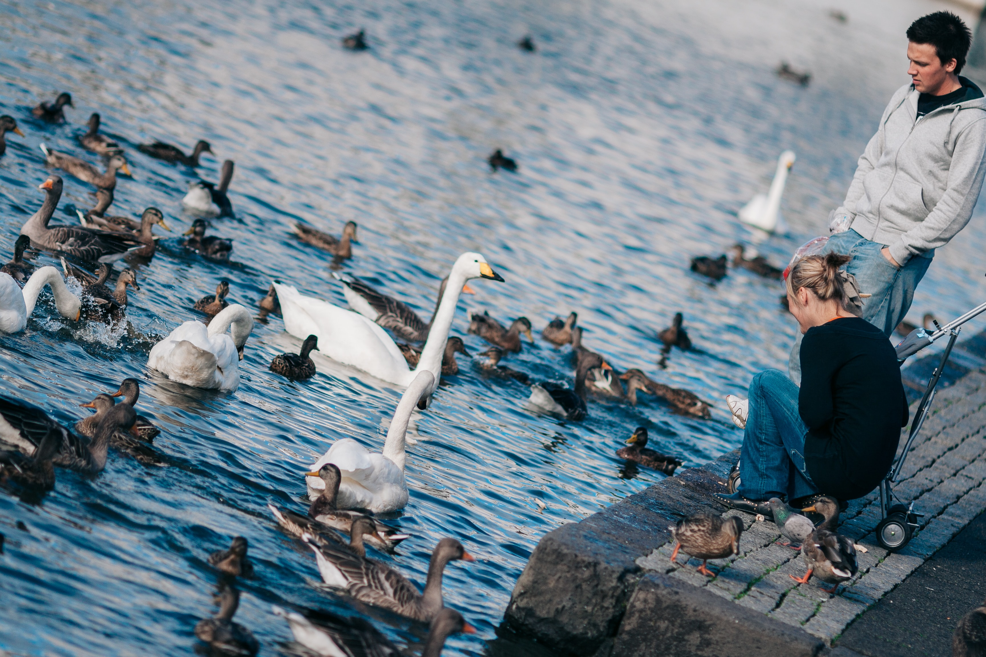 man and woman watching ducks roaming on water