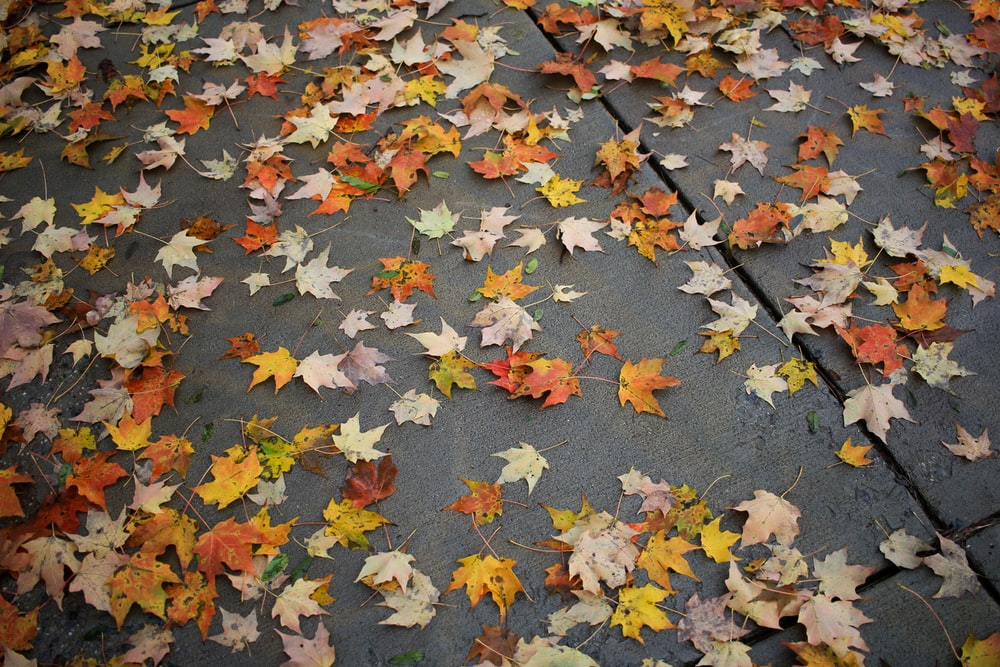 dried leaves on pavement