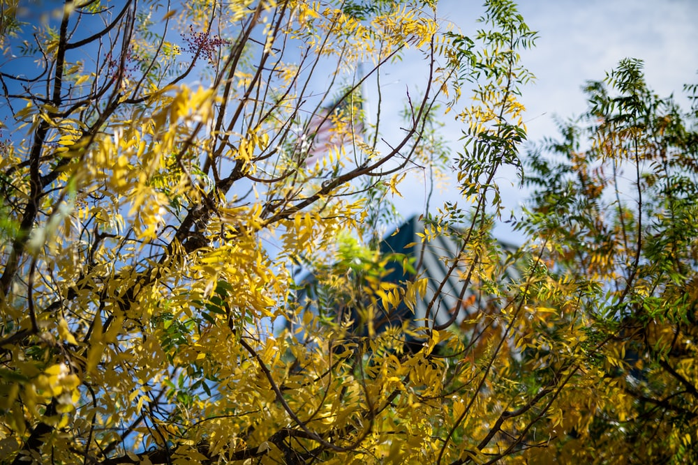 yellow leafed tree at daytime