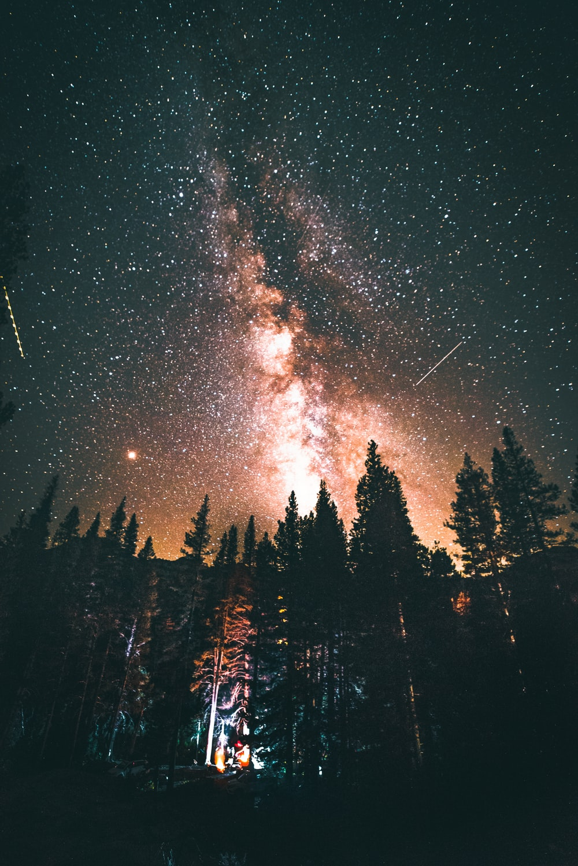 pine forest under Milky Way star trail at night