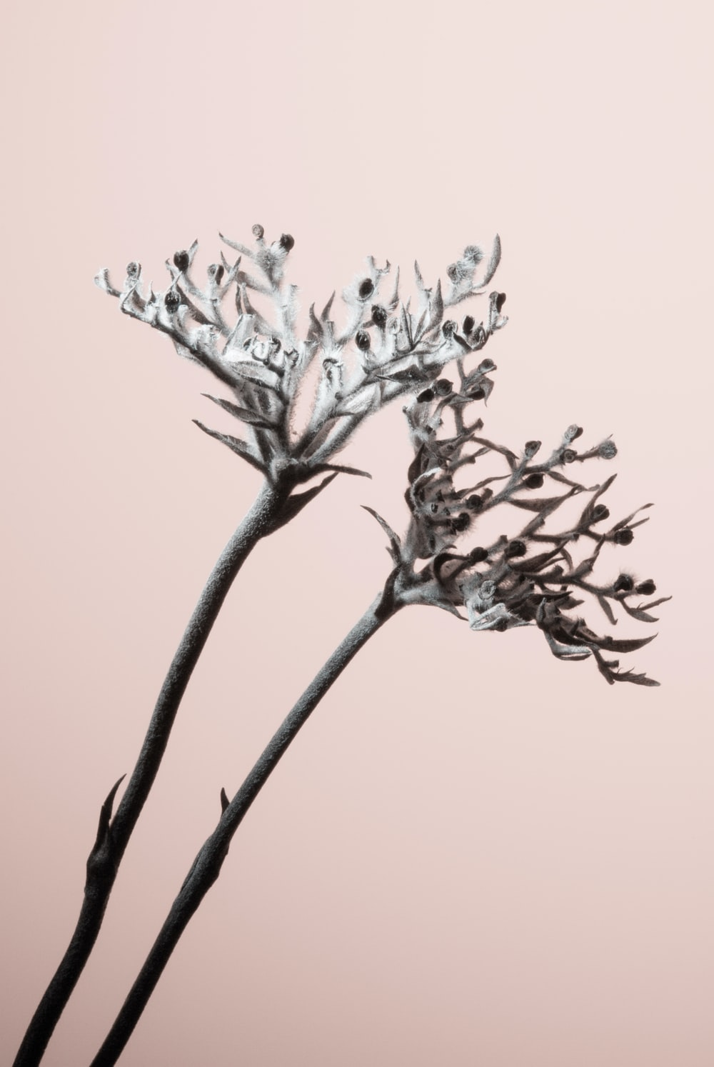 white leafed plants