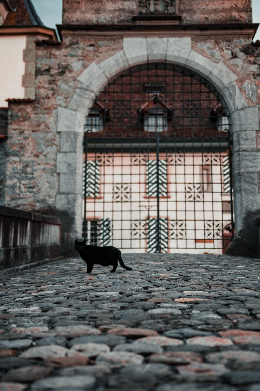 black cat near closed gate during day