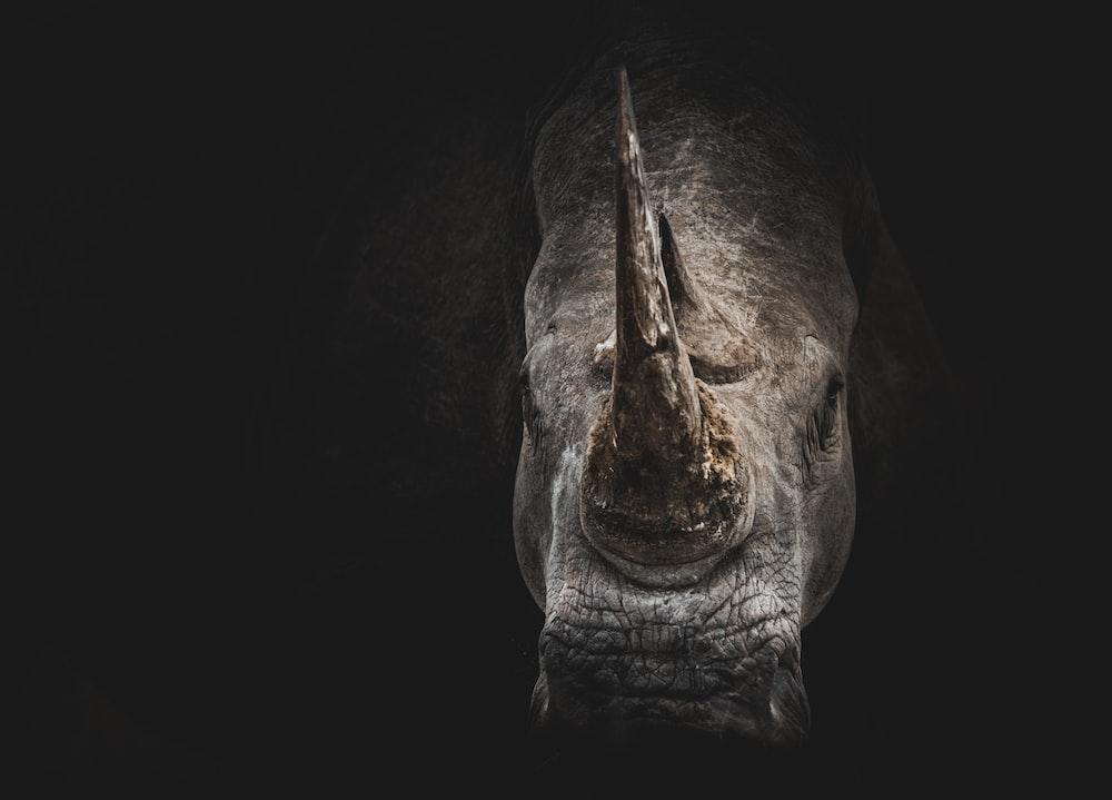 gray rhino digital wallpaper