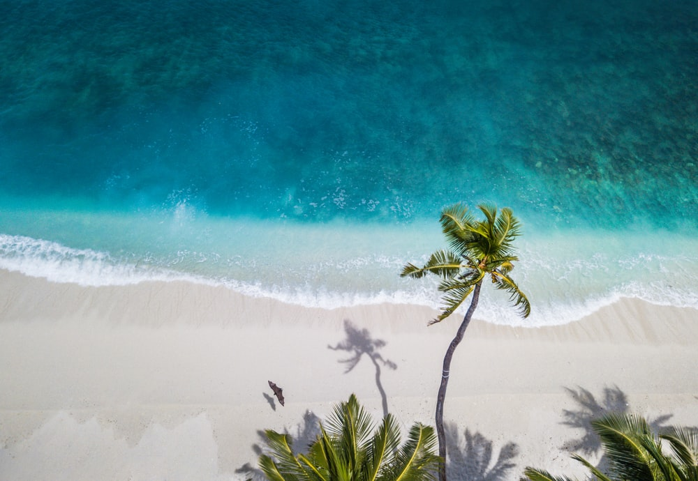 aerial nature photography of green palms on seashore during daytime