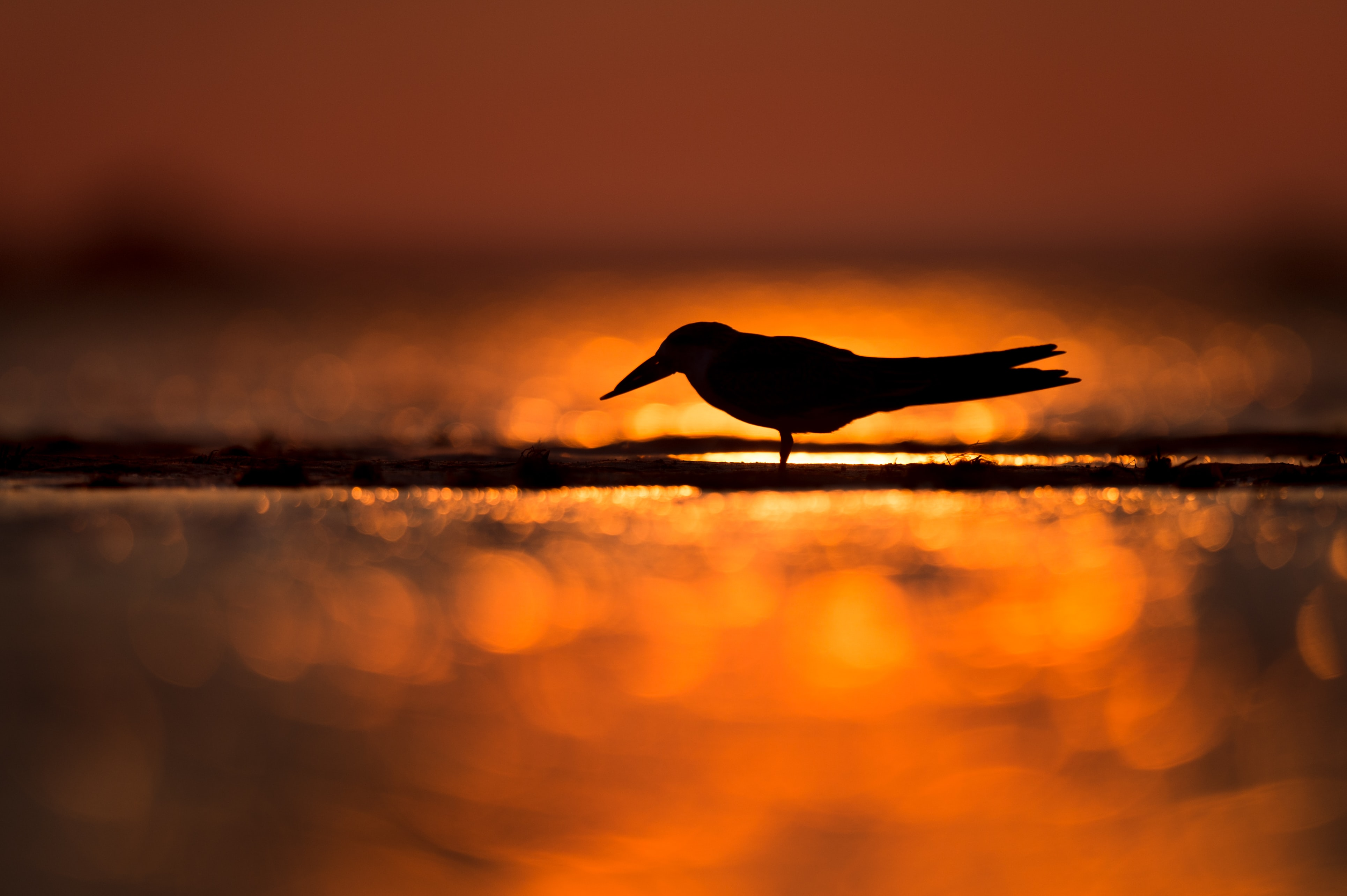 silhouette of bird standing on shore