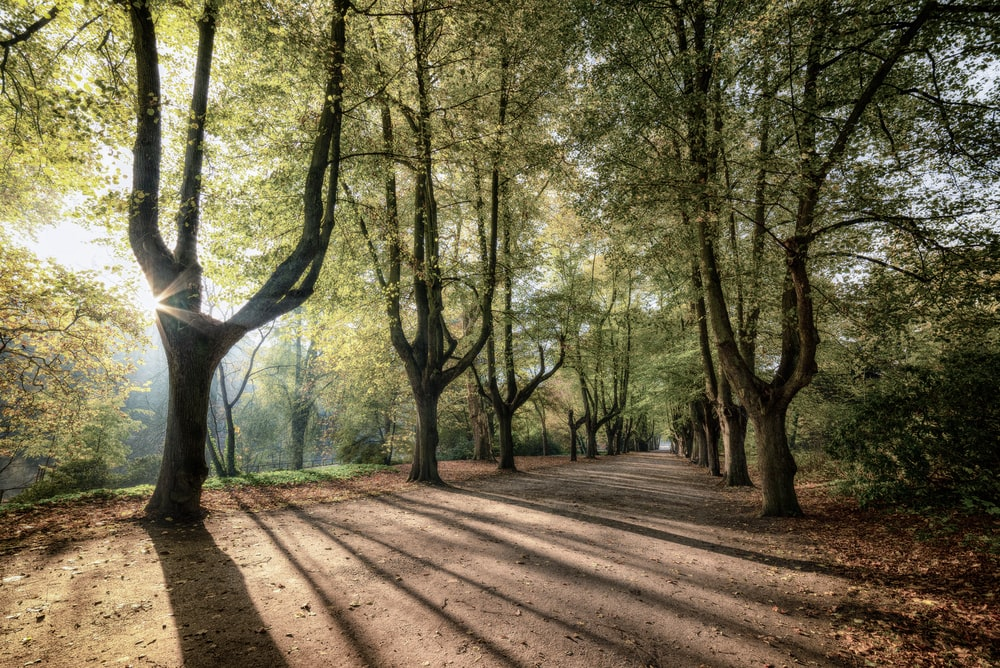 brown pathway surrounded by trees