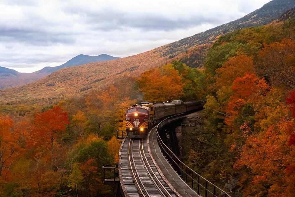 orange train between fall trees