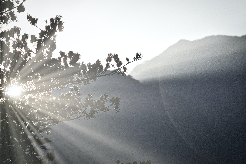 sunlight during daytime