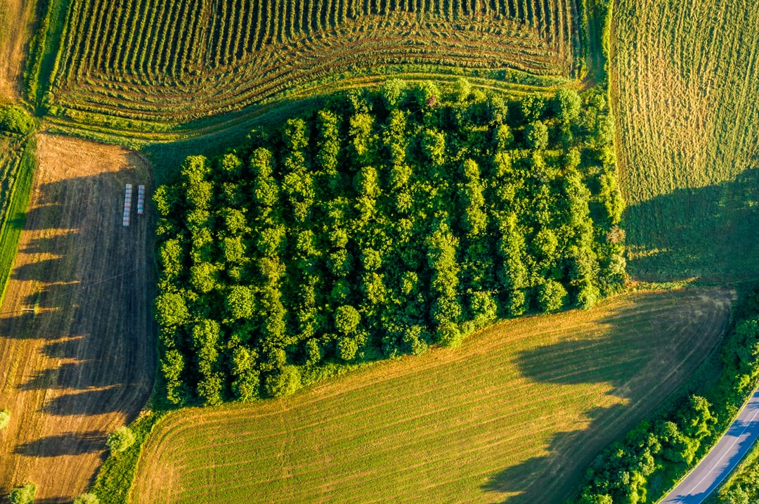 It was a beautiful morning, my wife and I were driving around the countryside of Tuscany. We were so amazed by the beauty that surrounds us and we decided to bring my drone up in the air to capture something that the eye has never seen before. We found this big chunk of trees that were to tidily lined up and that looked like a box. An amazing sight indeed.